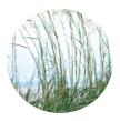 Lemongrass Scent